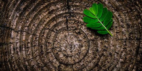 Fotografi på en mörk trädstams årsringar. Mot övre högra hörnet ligger ett dekorativt grönt löv
