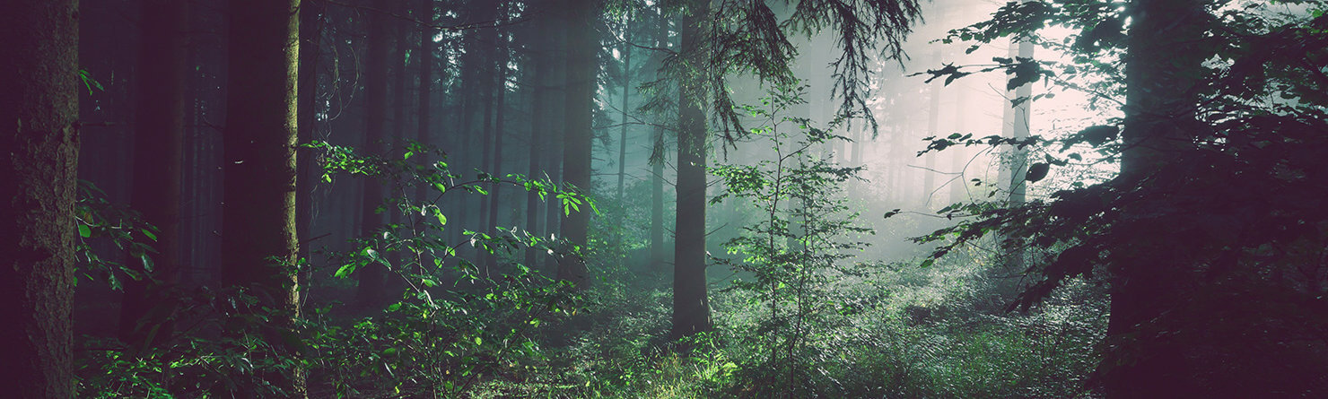 Fotografi i en skog med solljus som sipprar in i mörkret.